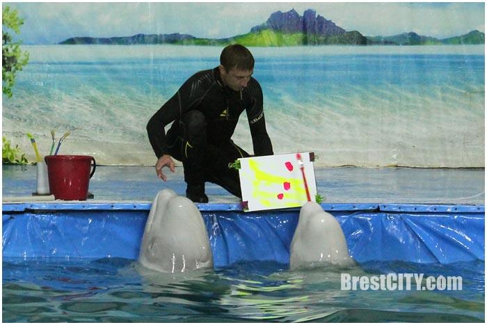 Дельфинарий в Бресте 2017
