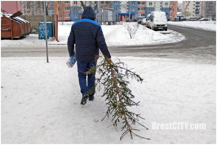 Демонтаж новогодних елок в Бресте. Фото BrestCITY.com