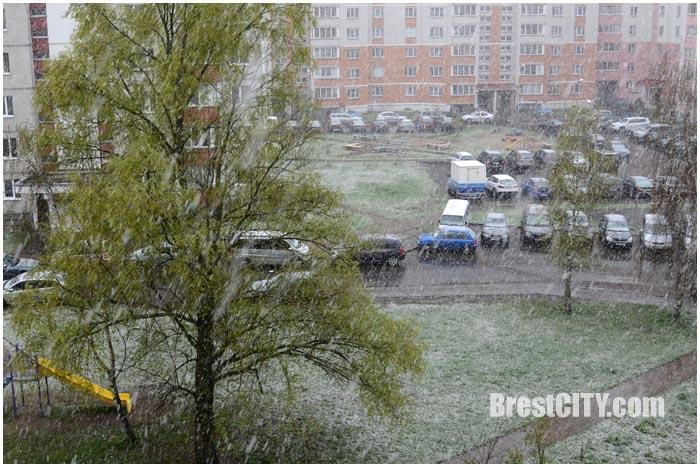 Снег в Бресте 16 апреля 2017